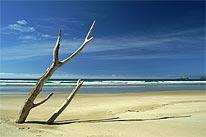 nz_beach.jpg